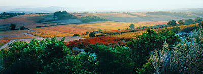 Dazur Photograph - Vineyards In The Late Afternoon Autumn by Panoramic Images