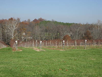 Winery Photograph - Vineyards In Va - 121228 by DC Photographer
