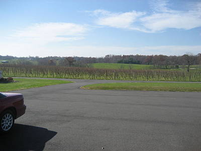 Vineyards In Va - 121230 Art Print by DC Photographer