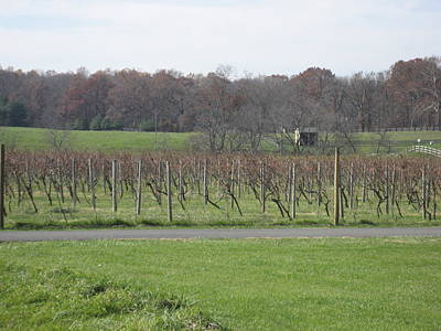 Winery Photograph - Vineyards In Va - 121234 by DC Photographer