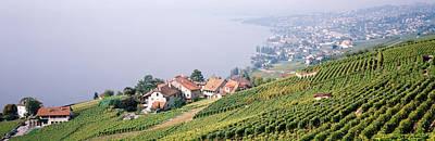 Vineyards, Lausanne, Lake Geneva Print by Panoramic Images