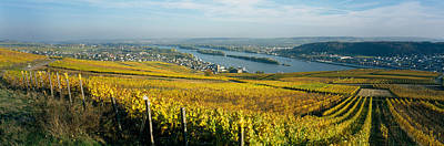 Winemaking Photograph - Vineyards Near A Town, Rudesheim by Panoramic Images
