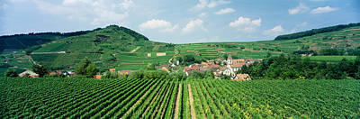 Winemaking Photograph - Vineyards Near A Village, Oberbergen by Panoramic Images