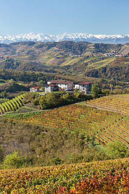 Grapevine Photograph - Vineyards, Near Alba, Langhe, Piedmont by Peter Adams