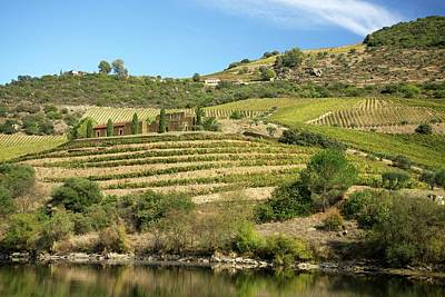 Vineyards Next To The Douro River Art Print by Sinclair Stammers