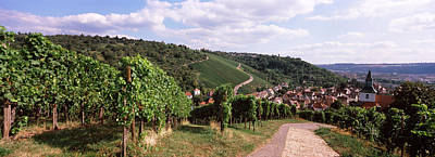Winemaking Photograph - Vineyards, Obertuerkheim, Stuttgart by Panoramic Images