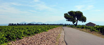 Photograph - Vineyards Of Chateauneuf Du Pape by Carla Parris