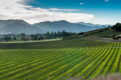 Photograph - Vineyards by Paul Johnson