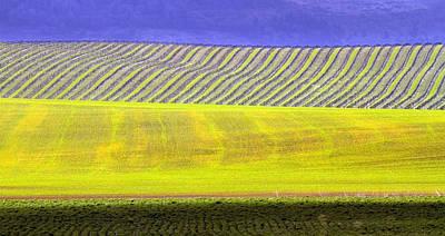 Vineyards Art Print by Rebecca Cozart