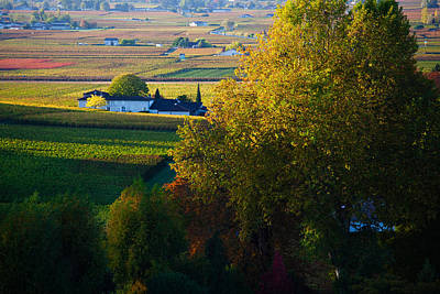 Aquitaine Photograph - Vineyards, Saint-emilion, Gironde by Panoramic Images