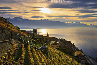 Vineyards Saint-saphorin, Lavaux Art Print by Yves Marcoux