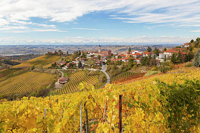 Grapevine Photograph - Vineyards, Treiso, Near Alba, Langhe by Peter Adams