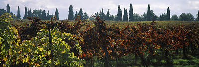 Winemaking Photograph - Vineyards With Trees In The Background by Panoramic Images