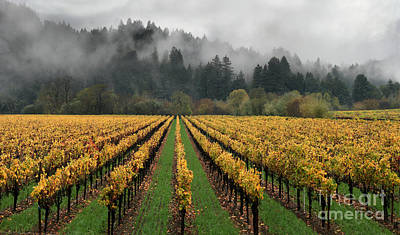 Vineyard Russian River Wine Country Sonoma County California Art Print