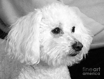 Photograph - Vinny Profile by Jean Wright