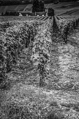 Vino Francez Original