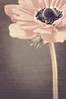 Photograph - Vintage Anemone by Caitlyn  Grasso