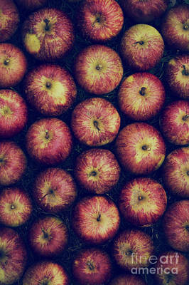 Vintage Apples Art Print by Tim Gainey