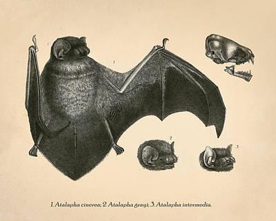 Creepy Mixed Media - Vintage Bat Anatomy by Pati Photography