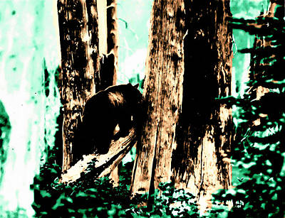 Vintage Bear In The Mount Rainier Forest Early 1900 Era... Art Print