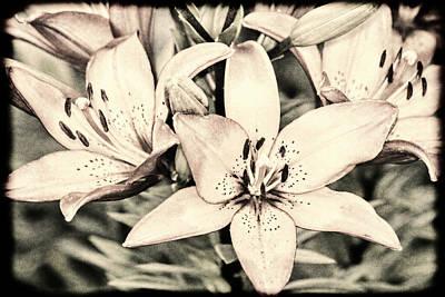 Photograph - Vintage Bleached Lily Art by Lesa Fine