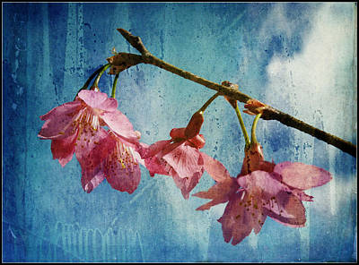 Photograph - Vintage Blossoms by Carla Parris