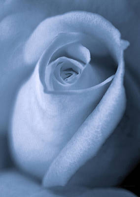 Photograph - Vintage Blue Rose Bud Flower by Jennie Marie Schell