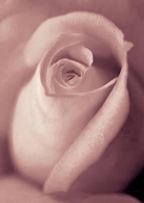 Olympic Sports - Vintage Blush Pink Rose Bud Flower by Jennie Marie Schell