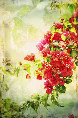 Photograph - Vintage Bougainvillea San Diego California by Marianne Campolongo