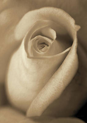 Photograph - Vintage Brown Rose Bud Flower by Jennie Marie Schell