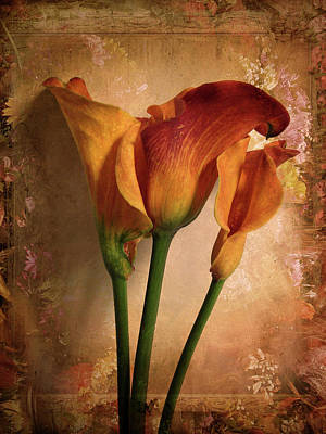 Orange Digital Art - Vintage Calla Lily by Jessica Jenney