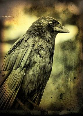 Vinatge Photograph - Vintage Crow by Gothicrow Images