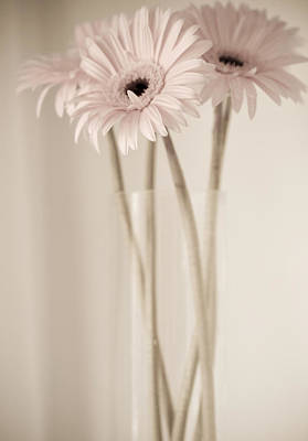 Gerbera Daisy Photograph - Vintage Daisies  by Julie Palencia