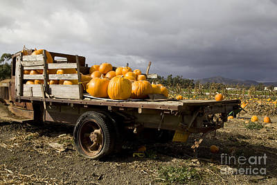 Photograph - Vintage Dodge Brothers Pumpkin Truck With Two Trees Ventura by David Millenheft
