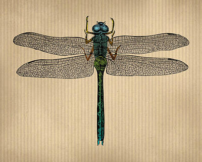 Engraving Digital Art - Vintage Dragonfly Tinted Engraving by Flo Karp