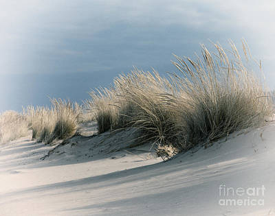 Indiana Dunes Photograph - Dune Grass by Timothy Johnson