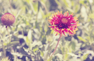 Art Print featuring the photograph Vintage Flowers by Mohamed Elkhamisy