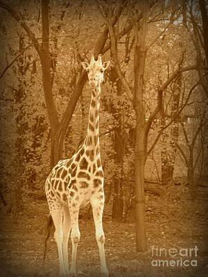 Photograph - Vintage Giraffe by Avis  Noelle