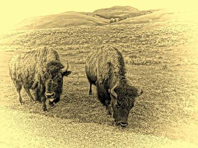 Vintage Great Buffalo On The Plains Art Print by Dan Sproul