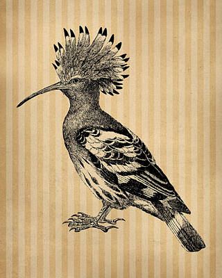 Engraving Digital Art - Hoopoe Bird by Flo Karp