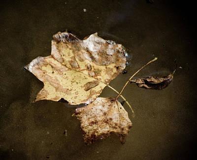 Photograph - Vintage Leaf by Cara Moulds