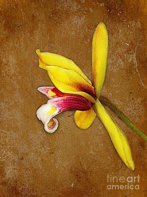 Vintage Orchid Art Print by Judi Bagwell