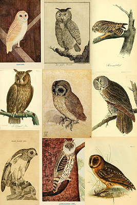 Vintage Owls Montage Art Print by Philip Ralley