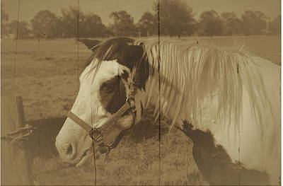 Photograph - Vintage Painted Horse by Ronald T Williams
