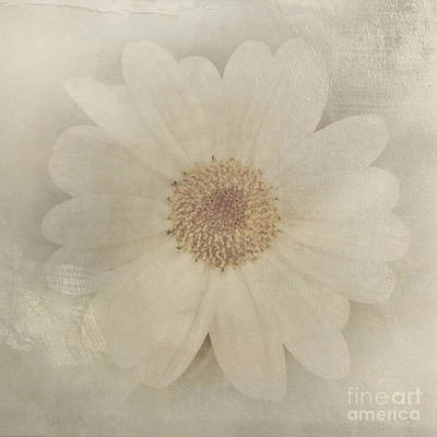 Vintage Painterly White Daisy  Art Print