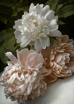 Photograph - Vintage Pale Pink Peonies by Brooke T Ryan