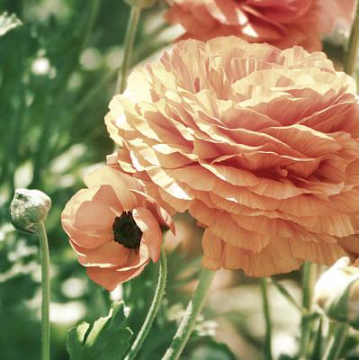 Photograph - Vintage Peach by Kim Swanson
