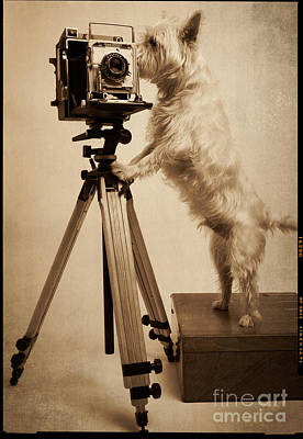 Classic Studio Photograph - Vintage Pho Dog Grapher Westie by Edward Fielding