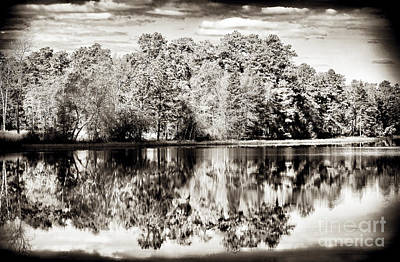 Photograph - Vintage Pine Barrens by John Rizzuto