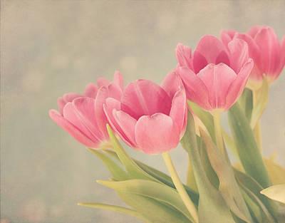 Kim Photograph - Vintage Pink Tulips by Kim Hojnacki